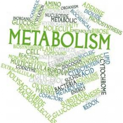 Variations in metabolism and body composition estimates throughout a day. - 0