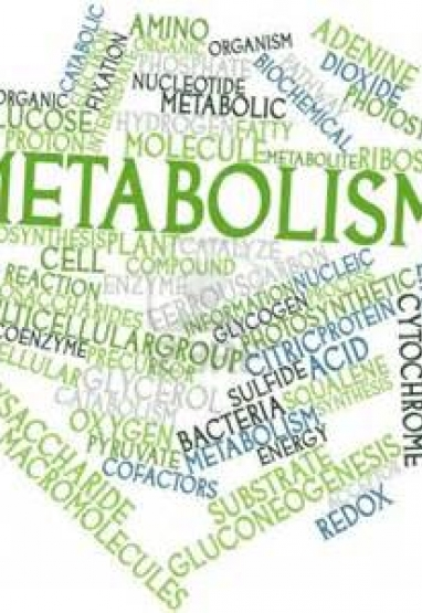 Variations in metabolism and body composition estimates throughout a day. 0